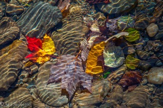 Fall leaves and sunlight ripples in Fargo Brook