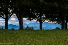 The High Peaks of the Adirondack Mountains view through maples along a ridge at Shelburne Farms.