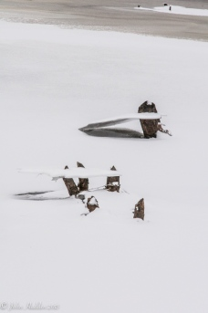 Plates of thin ice suspended on beaver chewed stems on a pond at the Audubon Center in hHuntington