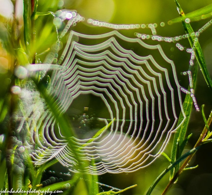 A tiny web hung with morning dew.
