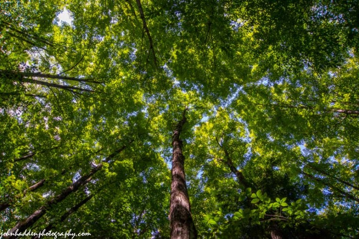 Looking up into the forest canopy