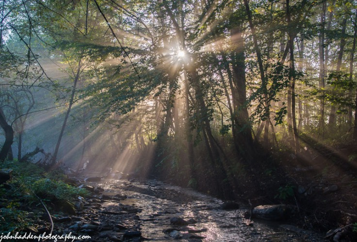 Sunlight streams through humid morning air above Fargo Brook