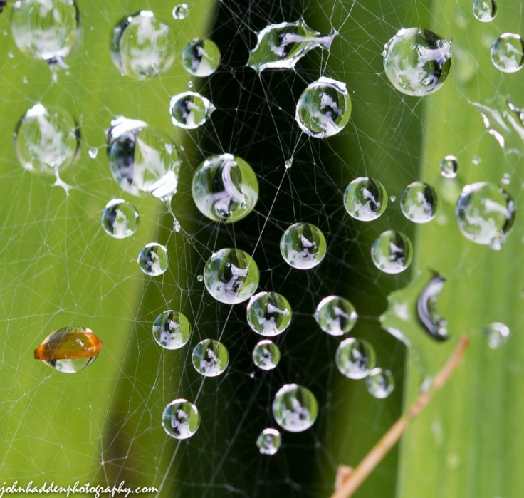 Rain drops caught in a spider's web