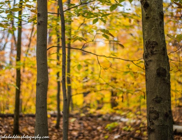 Deep in the beech woods