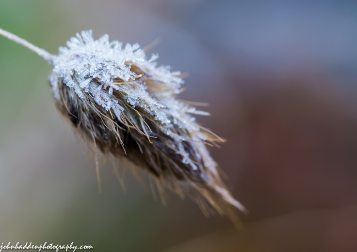 A sparkling of frost on ornamental grass