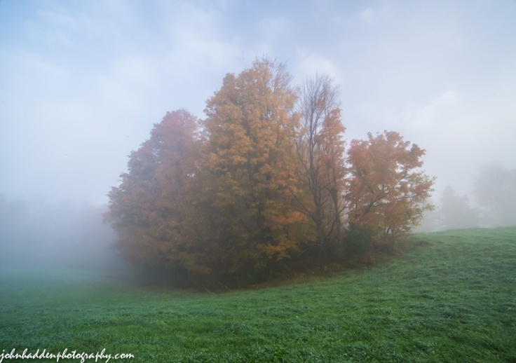 An island of trees in morning fog
