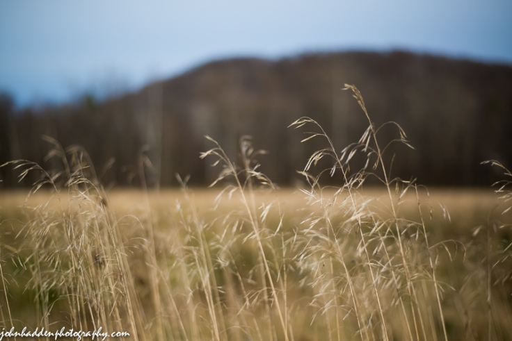 Dried grasses in a nearby field