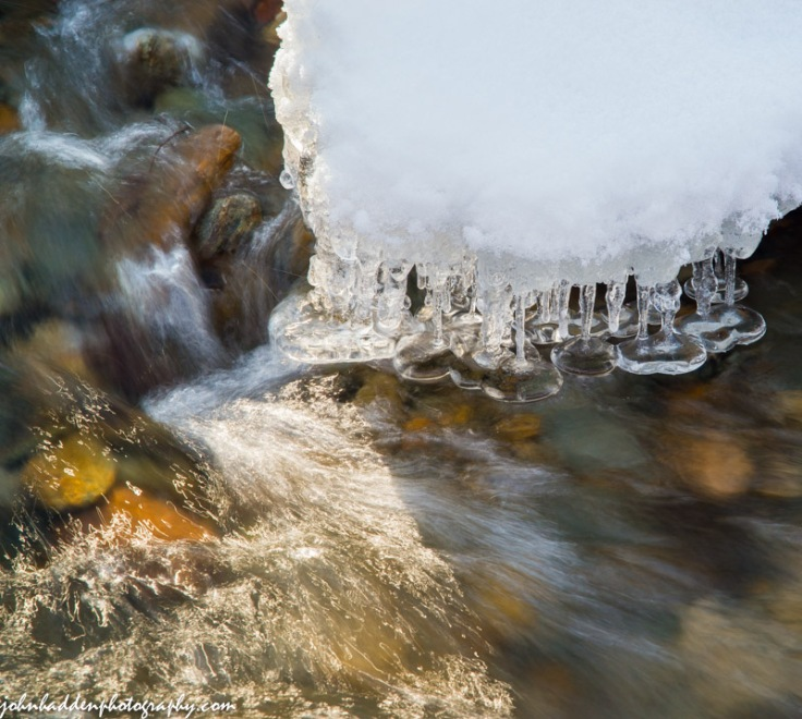 Ice forms tiny bells just above the flow in Fargo Brook