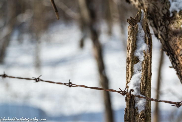 An old barbed wire fence near the back of our property