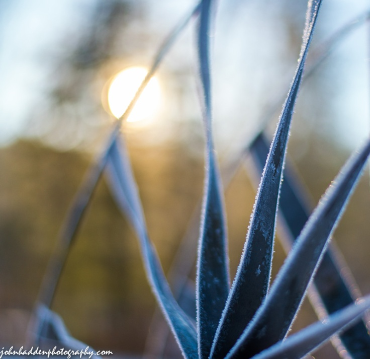 Morning frost on one of our wind sculptures by the pond