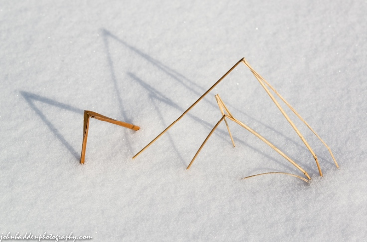 Bent stems in the snow
