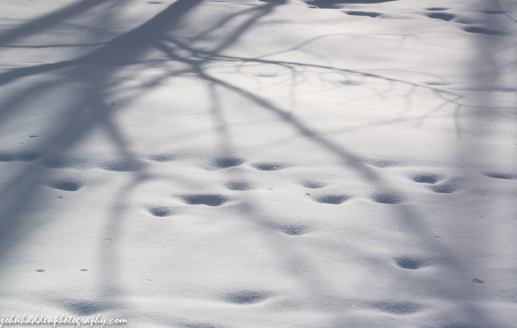 Buried deer tracks and morning shadows across new fallen snow
