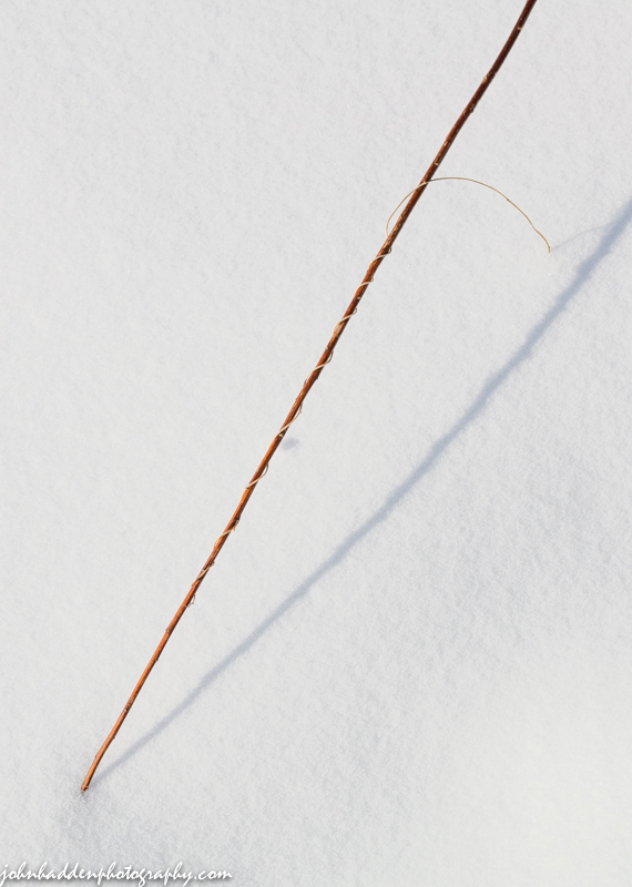 A twist of tiny vine unwinds from a stem in the snow