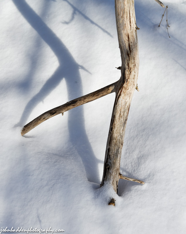A bare and bleached stick on morning snow