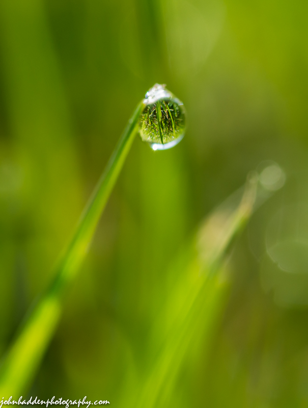 A solitary dew drop