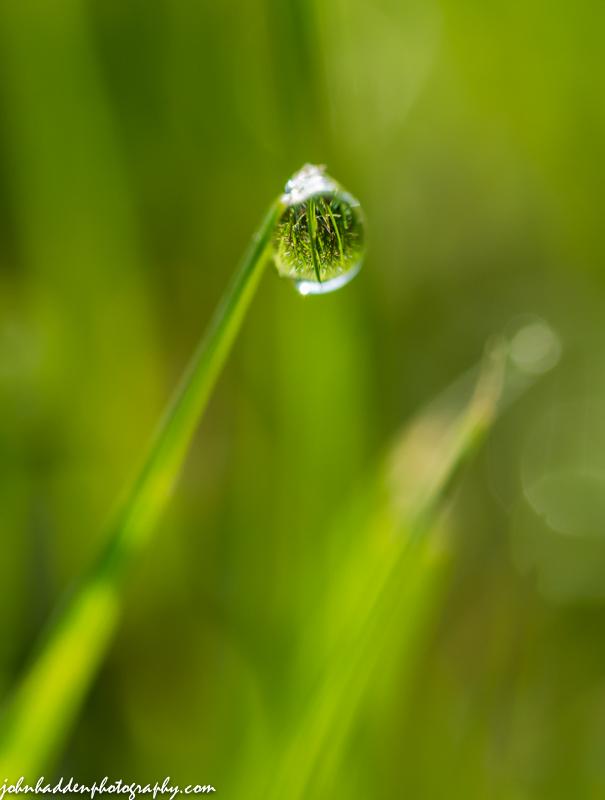 A solitary dew drop
