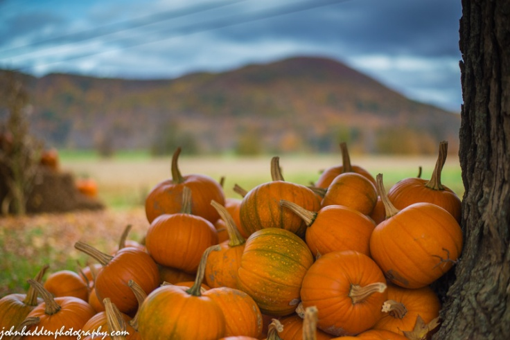 Pumpkins await at the Towers Farm