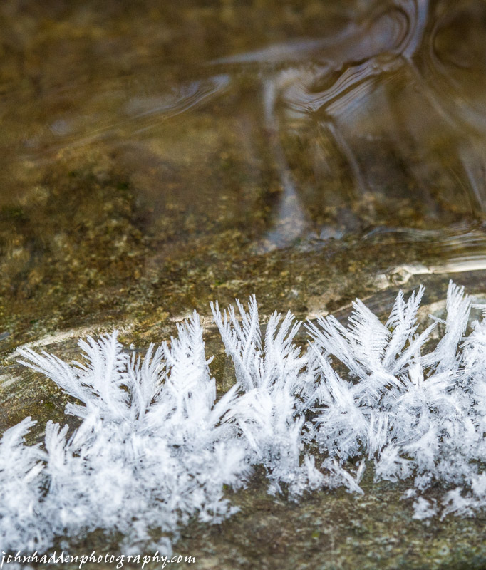 Frost feathers in Fargo Brook