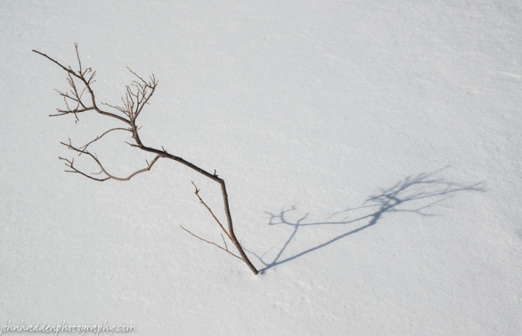 A solitary twig in deep snow