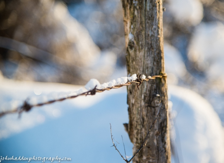 A crust of snow on barbed wire
