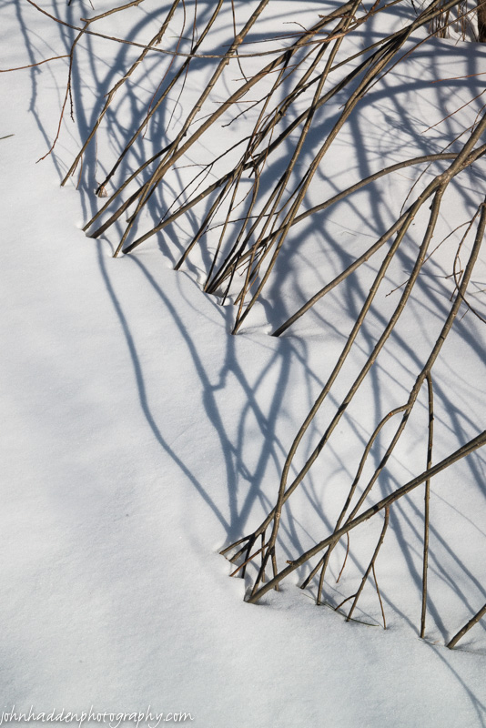 Willow stems bent into the snow