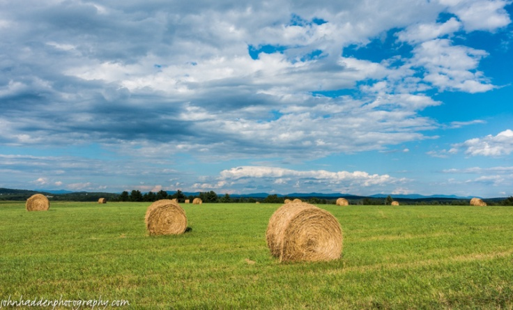 Fresh-cut round bales in Orwell, Vermont