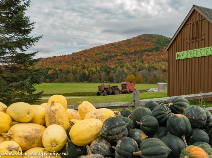 Piles of squash at the Moultrop Farm in Richmond