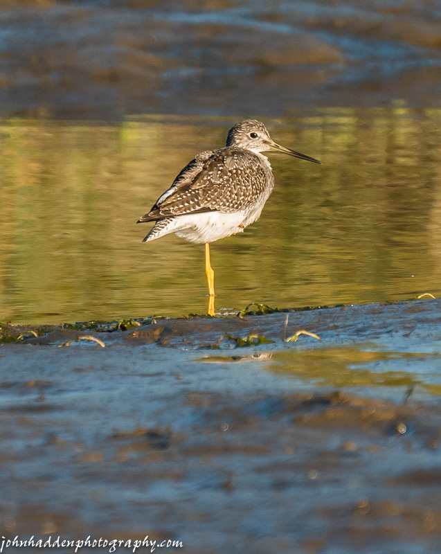 A well poised sandpiper