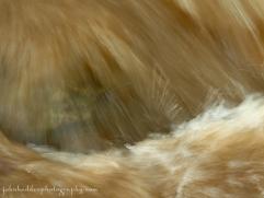 cafe-au-lait flow in Fargo Brook