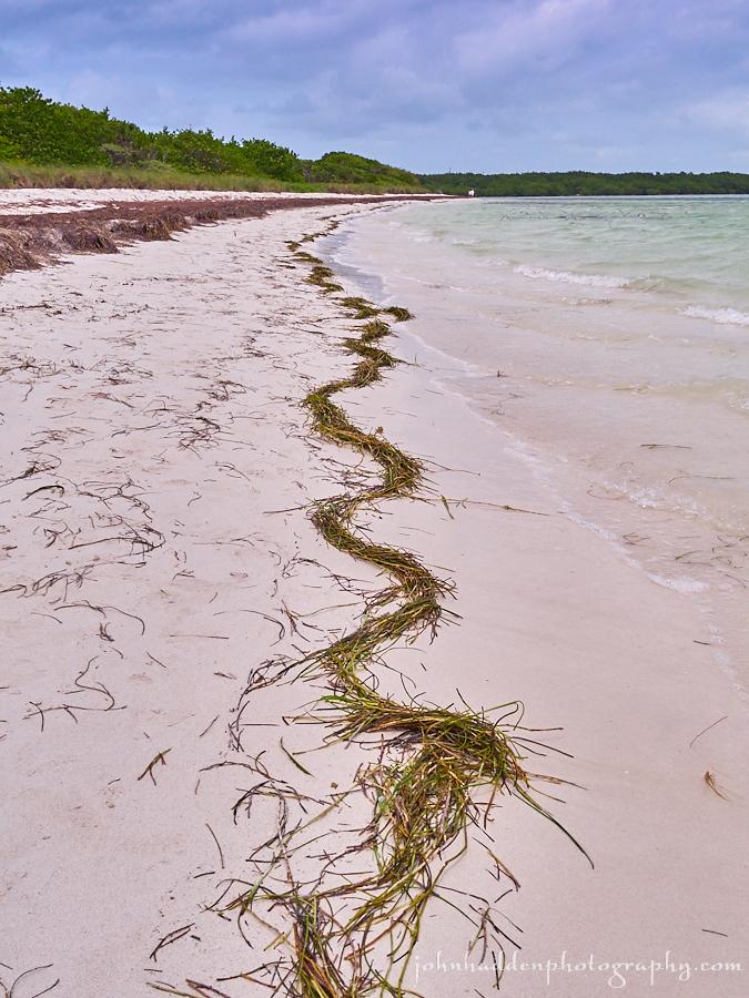 beach-squiggle