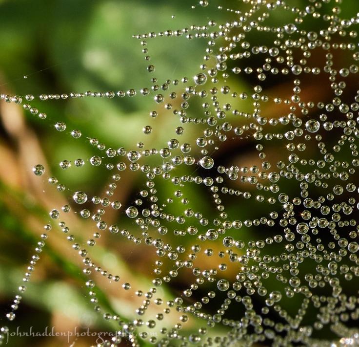 dew-web