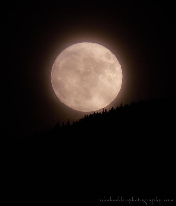 beaver-moon