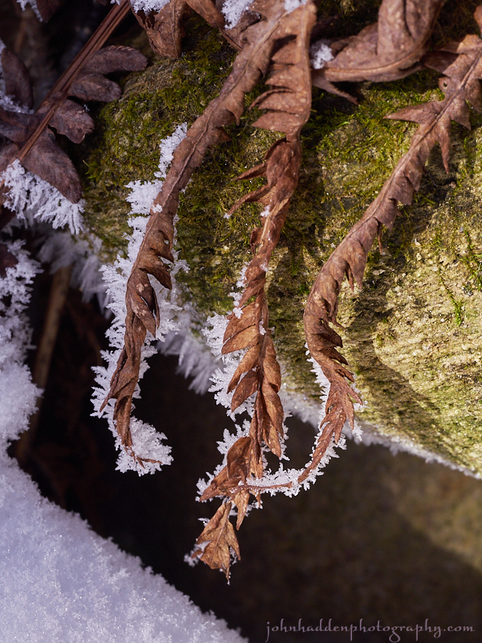 frosted-ferns