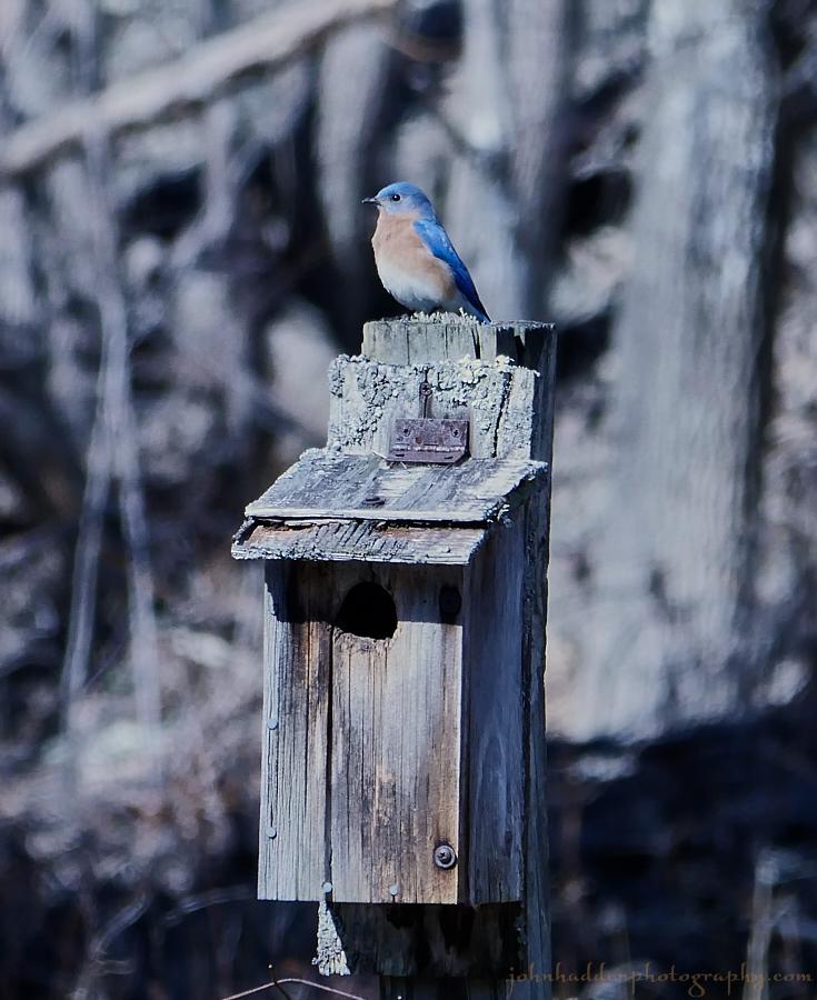 bluebird-2017