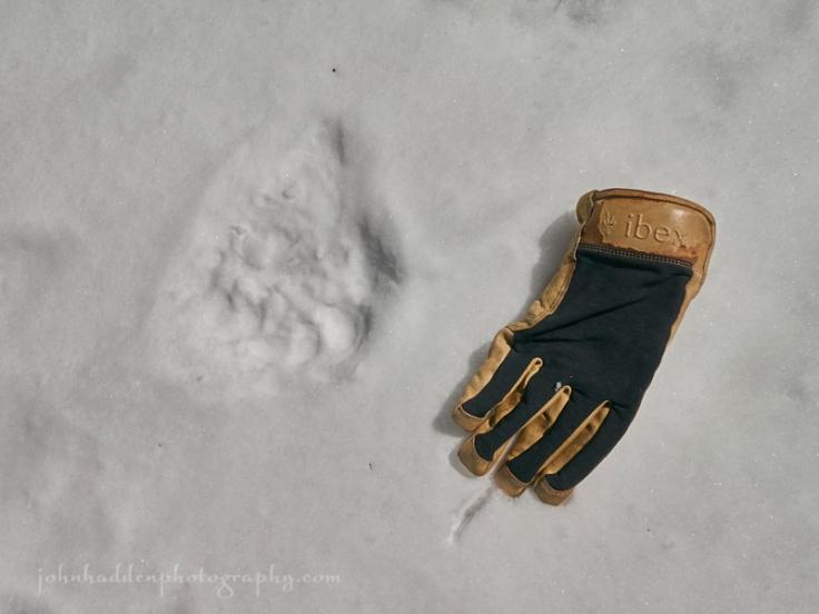 bear-track-glove